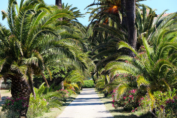 Palm trees in Hyères - France
