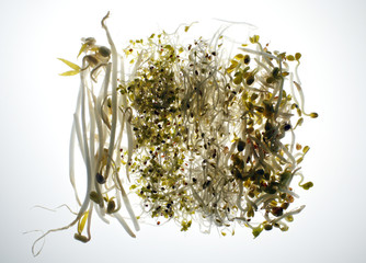 Beansprouts and salad sprouts are seen in this picture illustration taken in Berlin