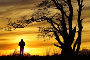 Silhouette in sunset Rye forrest Denmark