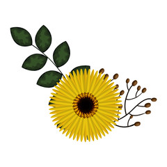 beautiful sunflower decoration icon vector illustration design