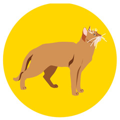 Cats of different breeds. Icons. Vector image in a flat style. Illustration on a round background. Element of design, interface
