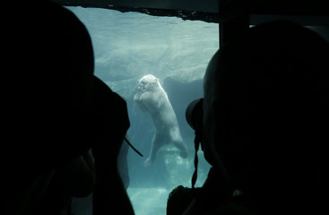 Visitors take pictures of a polar bear in the newly opened polar bear world in the zoo of Vienna
