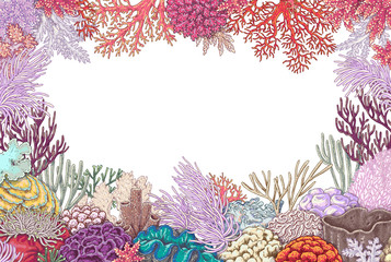 Frame of Corals