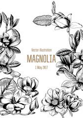 Магнолии. Векторная открытка с цветами. Ботаника. Растительный рисунок. Цветущие деревья. Весенние цветы.