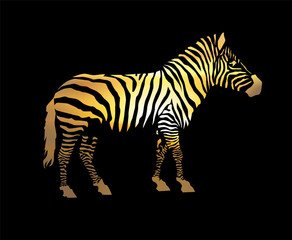 Zebra silhouette. Yellow tones of stripes. Black background.