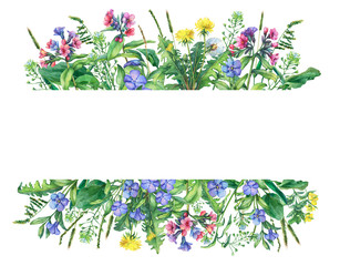 Banner with wild meadow flowers and grass, isolated on white background. Horizontal border with field flowers and herbs.  Watercolor hand drawn painting illustration.