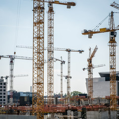 many cranes and construction workers on  construction site