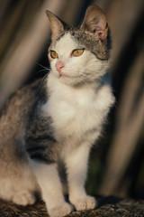 Playful cute cat in garden.