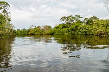 Trees lining river Yacuma in Bolivia