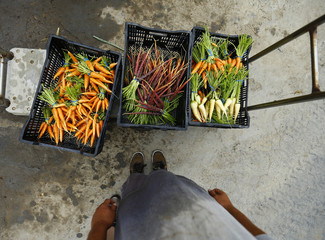 Makoto Chino stands over freshly picked and washed carrots at his family's farm in Rancho Santa Fe, California