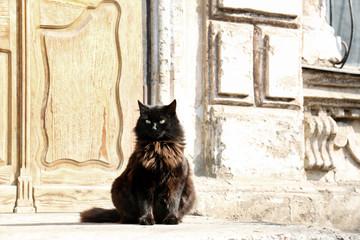 Cat sitting near door on street