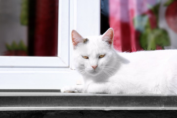 Cat lying on windowsill outdoor