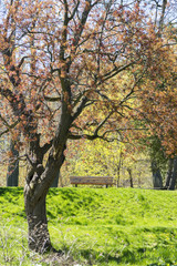 Park bench on top of a grassy hill, beautiful orange and red tree in foreground