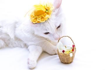 Gato branco com chapéu amarelo cheirando uma cesta de flores em fundo branco.