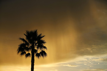 A palm tree is silhouetted as morning sunlight is reflected through rain falling from a passing cloud near Moonlight Beach in Encinitas, California