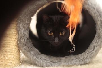 Gato preto observando de dentro da sua toca