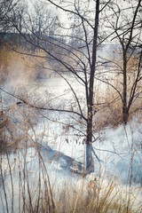 Trees in fire