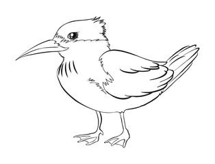 Doodle animal for bird