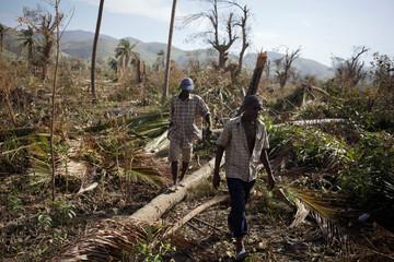 Men walk over trees downed by Hurricane Matthew in Coteaux, Haiti