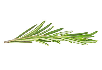 Twig of rosemary on a white background, close up