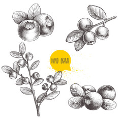 Hand drawn sketch style set of blueberries. Isolated on white background. Forest berry. Eco food vector illustration.