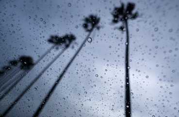 A storm brings moisture to drought stricken Southern California as palm trees are blown in the wind, in Encinitas