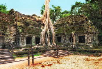 Ta Prohm temple covered in tree roots, Angkor Wat, Cambodia