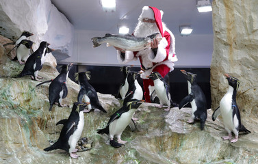 A man dressed as a Santa Claus poses with penguins at Marineland animal park in Antibes