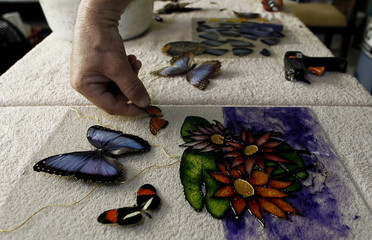 Frander Arroyo glues a butterfly while making a painting at Blue Morpho Butterfly House in Alajuela