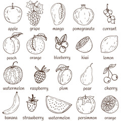 Set of fresh healthy hand-drawing fruits isolated.  Organic farm illustration. Healthy lifestyle vector design elements.