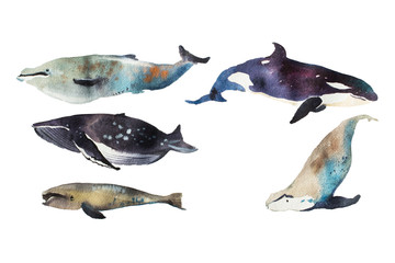 Watercolor whales Hand drawn illustration on white.