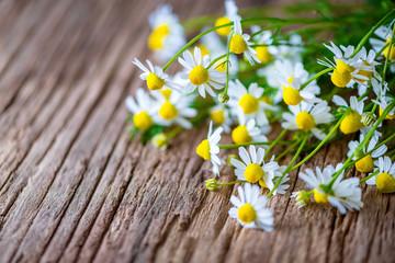 Echte Kamille - Blüten - Kräuter - Naturheilkunde - Matricaria chamomilla