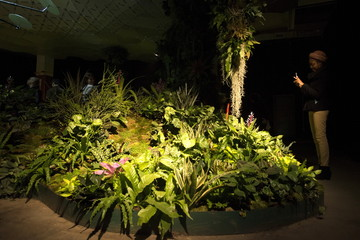 A woman photographs plants at the Lowline Lab during opening weekend in Manhattan