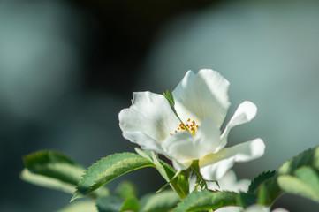 white flower in foreground on garden background