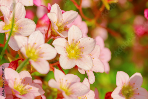 Flowers Of The Cherry Blossoms On A Spring Day Stock Photo And