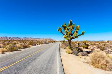 Road in Joshua Tree National Park, California, USA