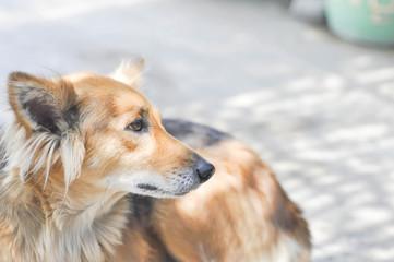 stray dog or mongrel dog