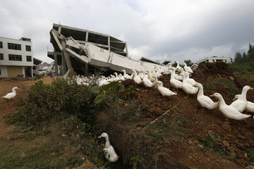 A flock of ducks stands in front of a newly-demolished house in Haikou