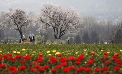 Kashmiri schoolgirls stand inside Kashmir's tulip garden after its opening in Srinagar