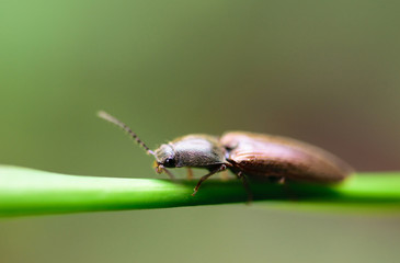 brown small bug on grass