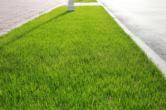 Cropped green lawn on the street a Sunny day. Grass is cut closeup