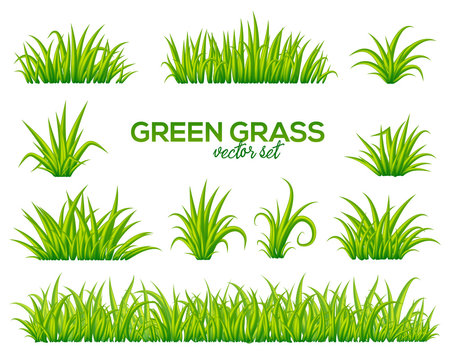 Vector tufts of grass isolated on white background
