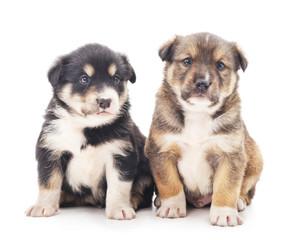 Little puppies.