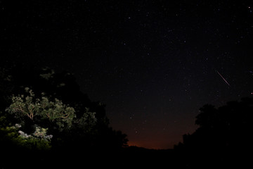 A meteor streaks past stars in the night sky above trees in the Los Alcornocales (cork oak forests) nature park, during the Perseid meteor shower in the ancient village of La Sauceda, near Cortes de la Frontera