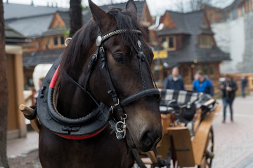 Horse in the village of Zakopane, Poland, Poland