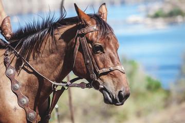 Horse in bridle closeup