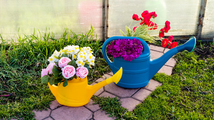 Yellow and blue watering can with bouquets of flowers in the spring garden