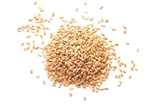 Heap of wheat seeds isolated on white background