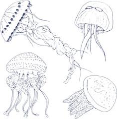 Jellyfish set. Hand Drawn style