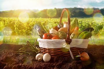 Vegetables in basket on soil with crop landscape background